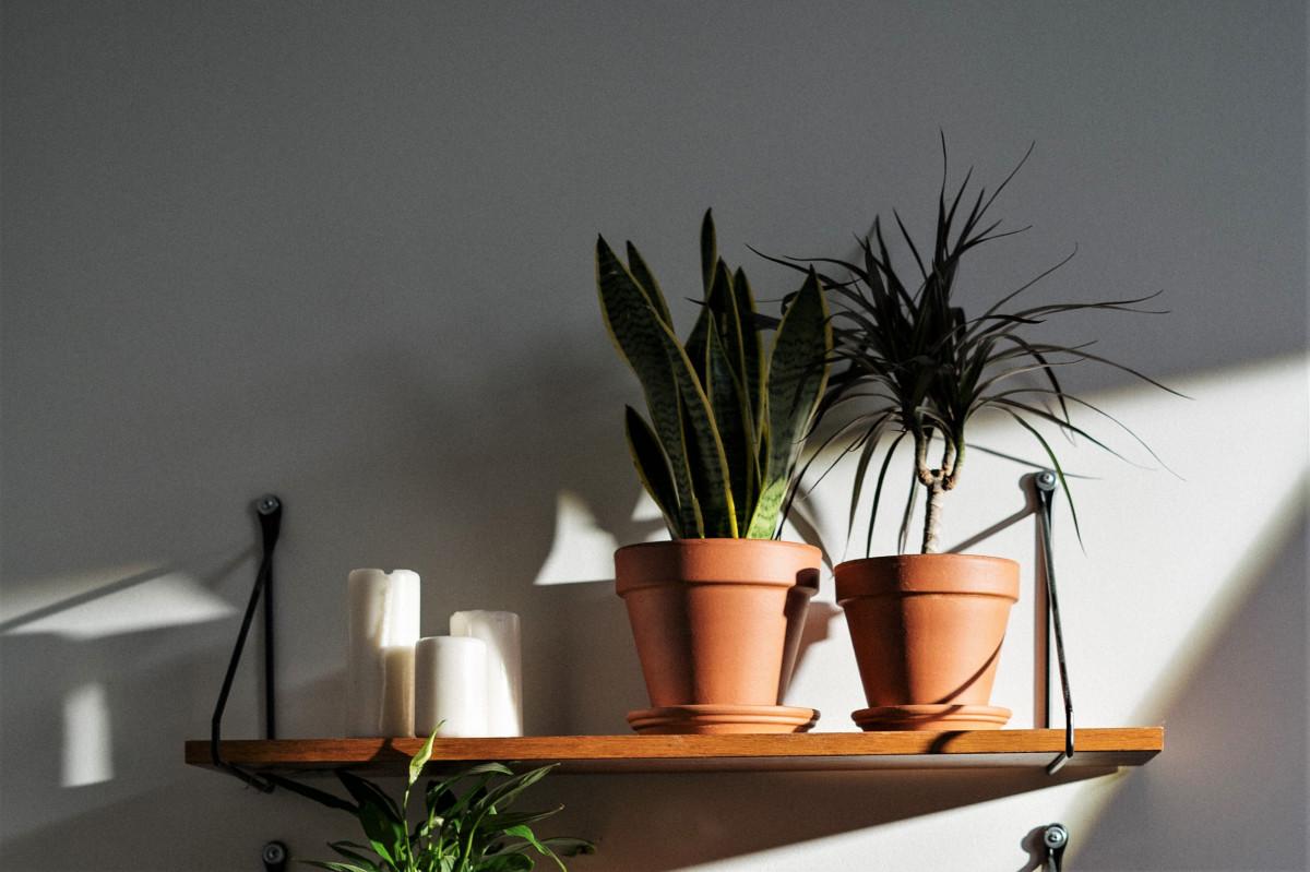 Top 5 Low-Light House Plants