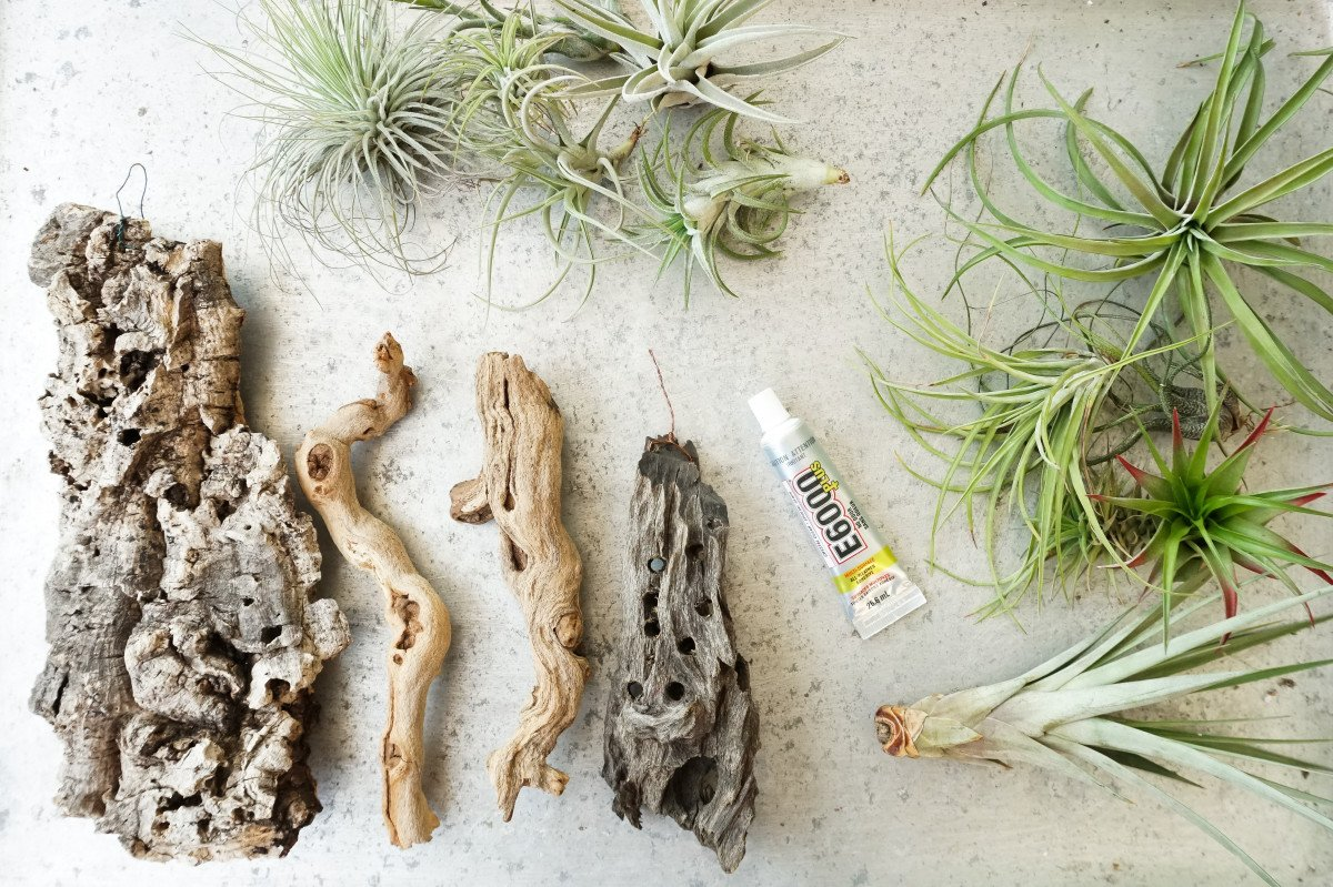 How to Mount Air Plants