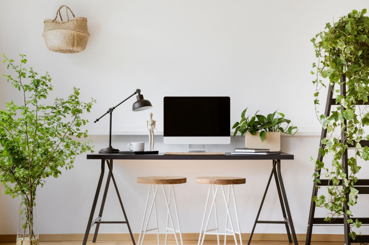 Top 10 Office Plants