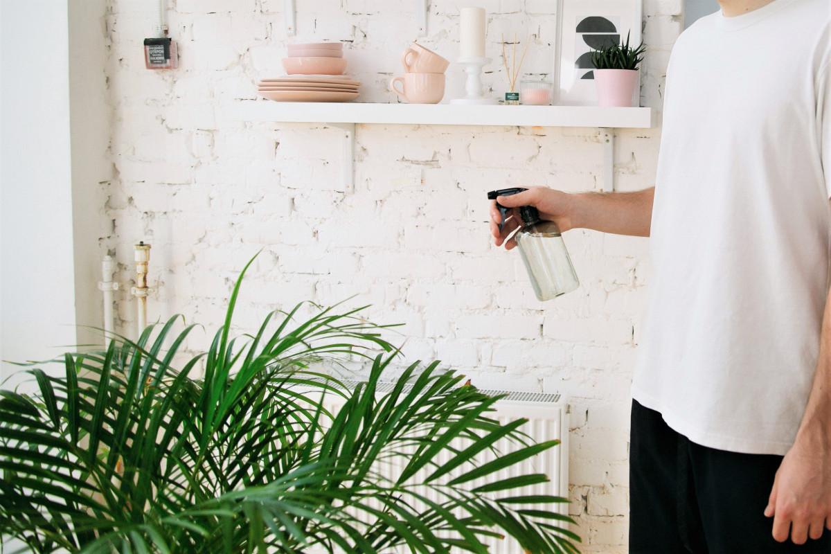 House Plants 101: Pest Control