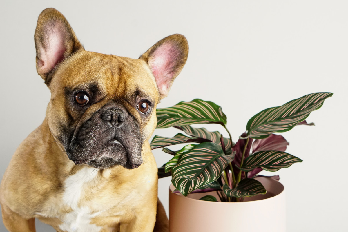 Top 10 Pet Friendly House Plants