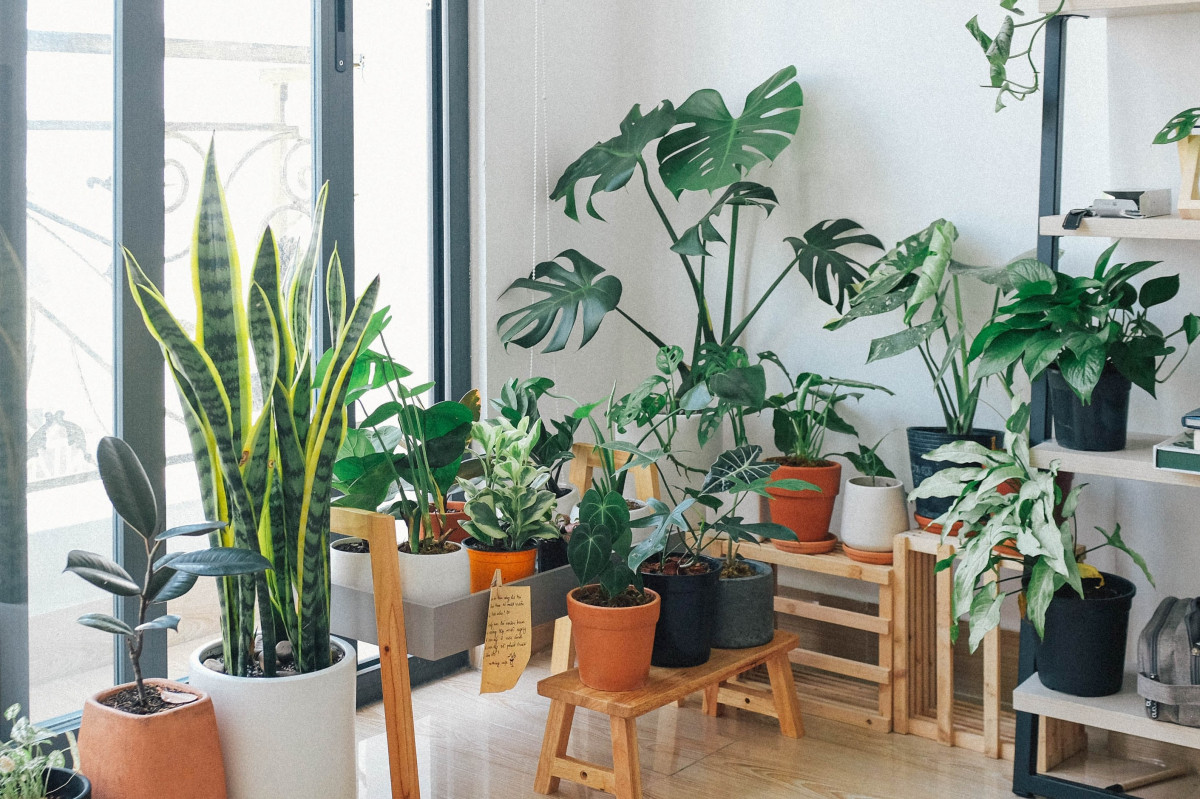 How to Care for Your Houseplants!