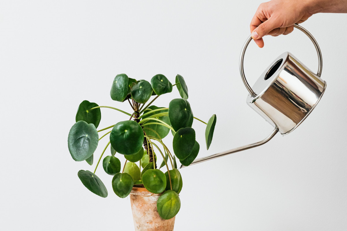When Should I Water My House Plant?