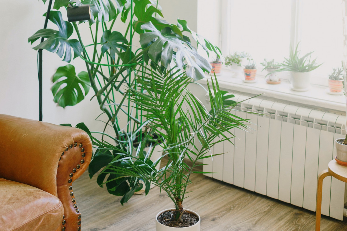 Top 5 Benefits of Houseplants for You and Your Home