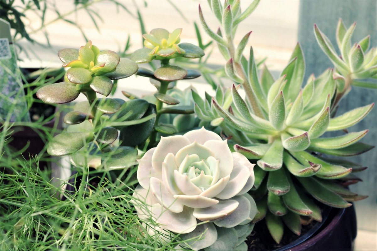 How to DIY an Indoor Succulent Garden - Our Guide