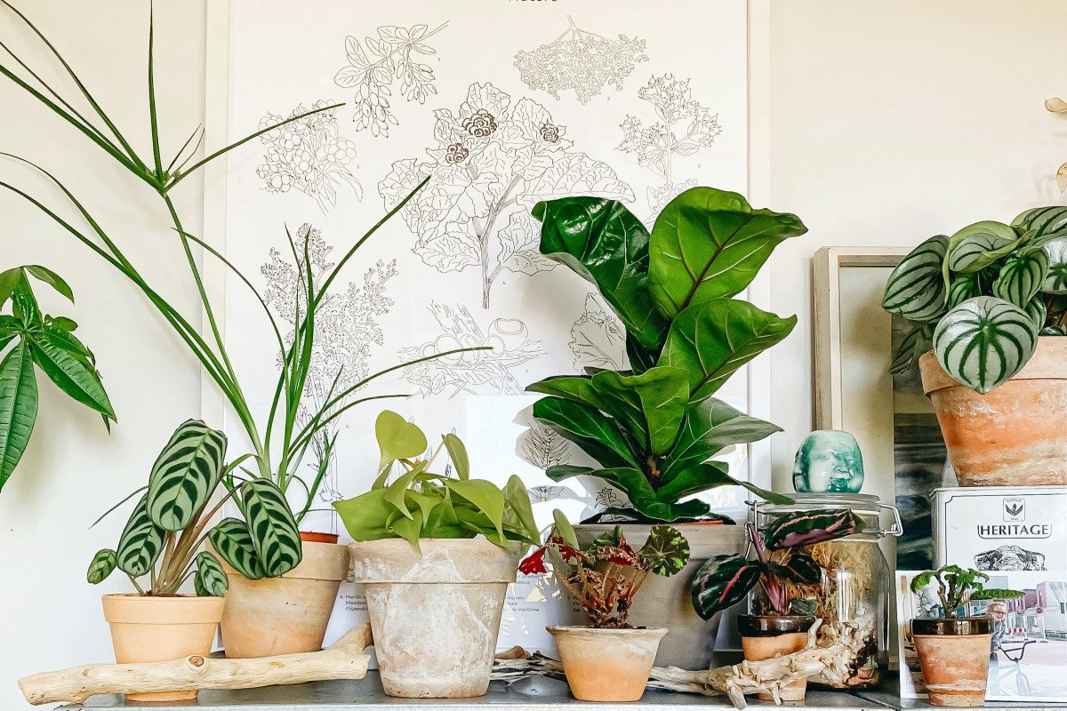 Top 10 Commonly Asked House Plant Questions