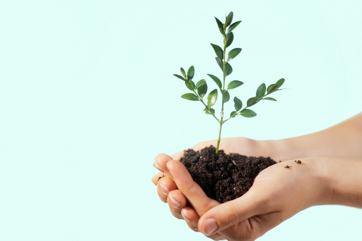 We're Reducing Our Carbon Footprint by Planting Trees!
