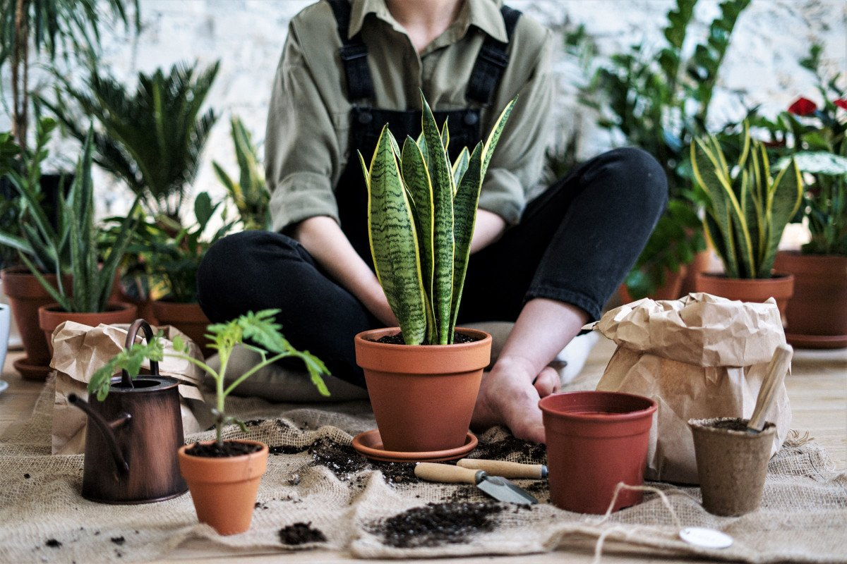 Repotting House Plants – How and When to Do It