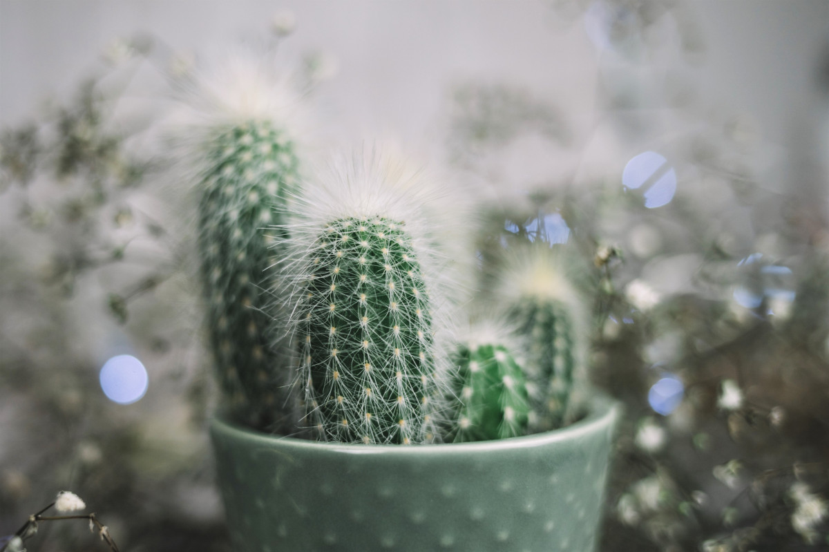 How to Take Care of Your Succulent in Winter