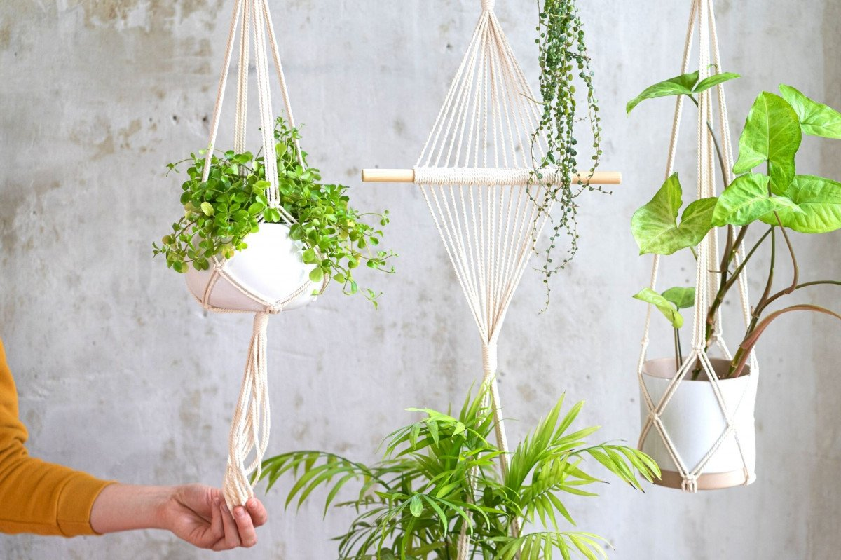 Top 10 Trailing House Plants