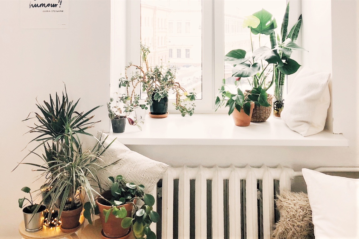 Windowsill House Plant Guide