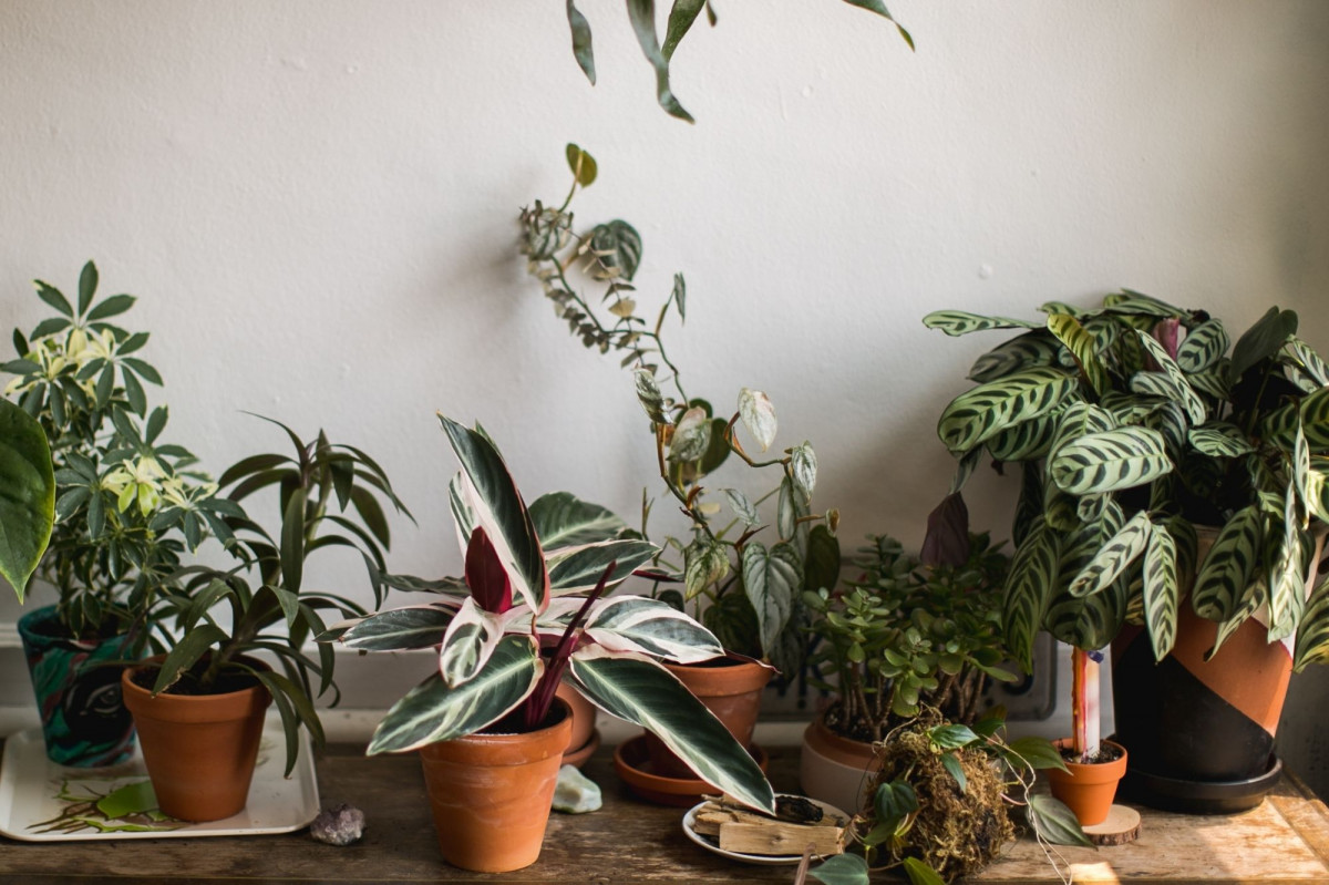 How to Winterize your House Plants