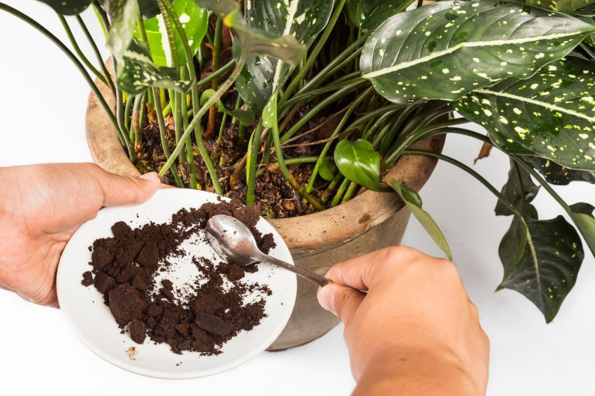 a person adding coffee grounds to their house plants soils
