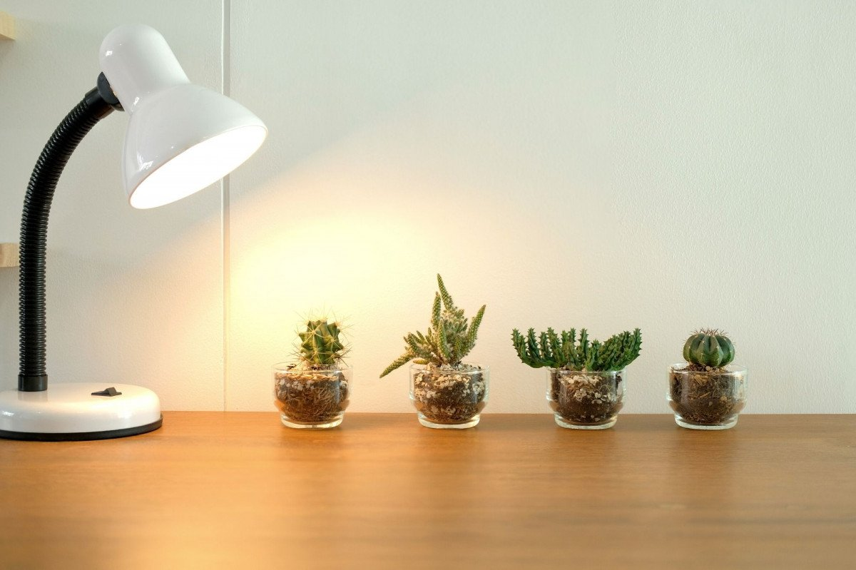 a photo of a grow bulb used in a desk lamp for house plants