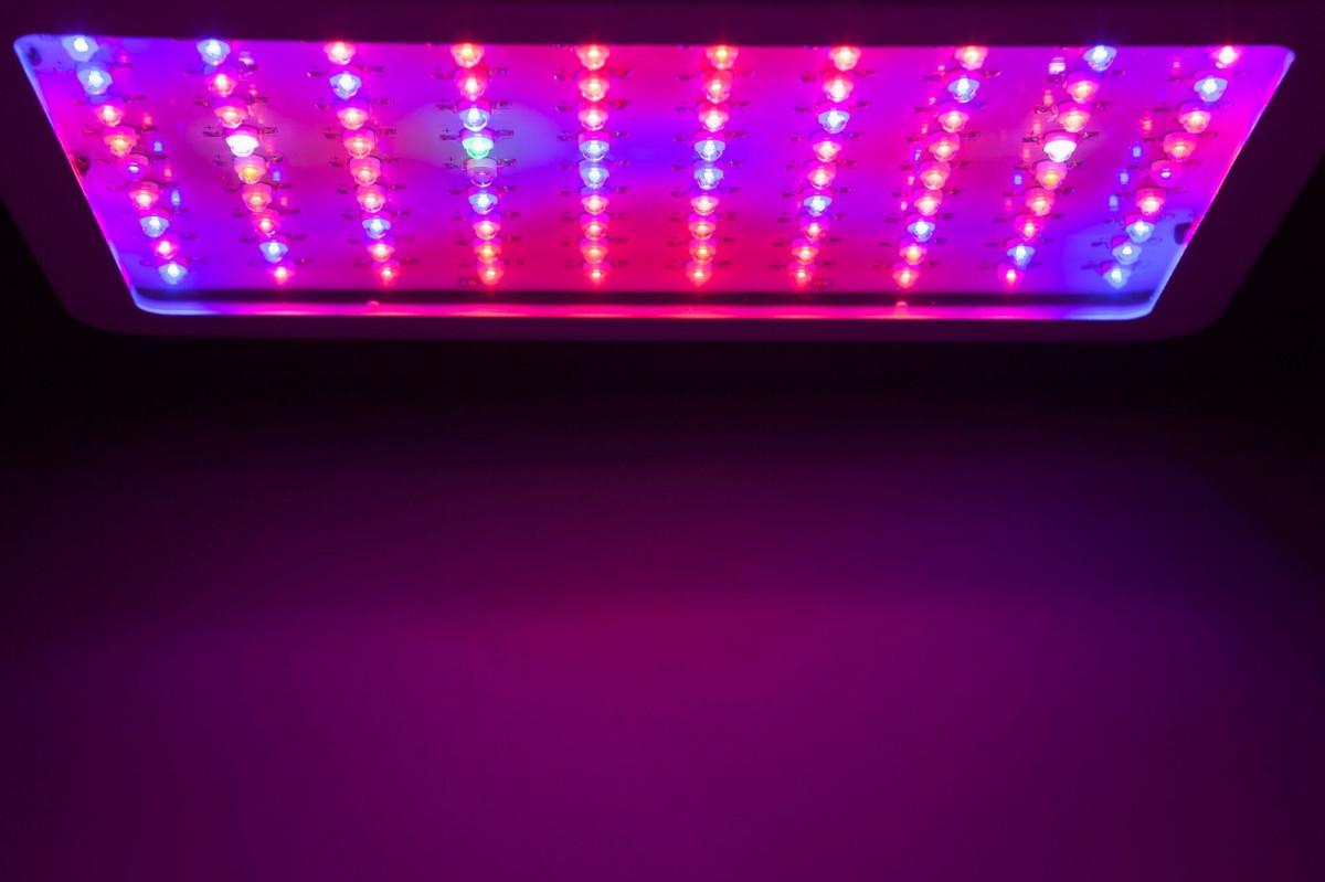 red - blue spectrum grow light panel