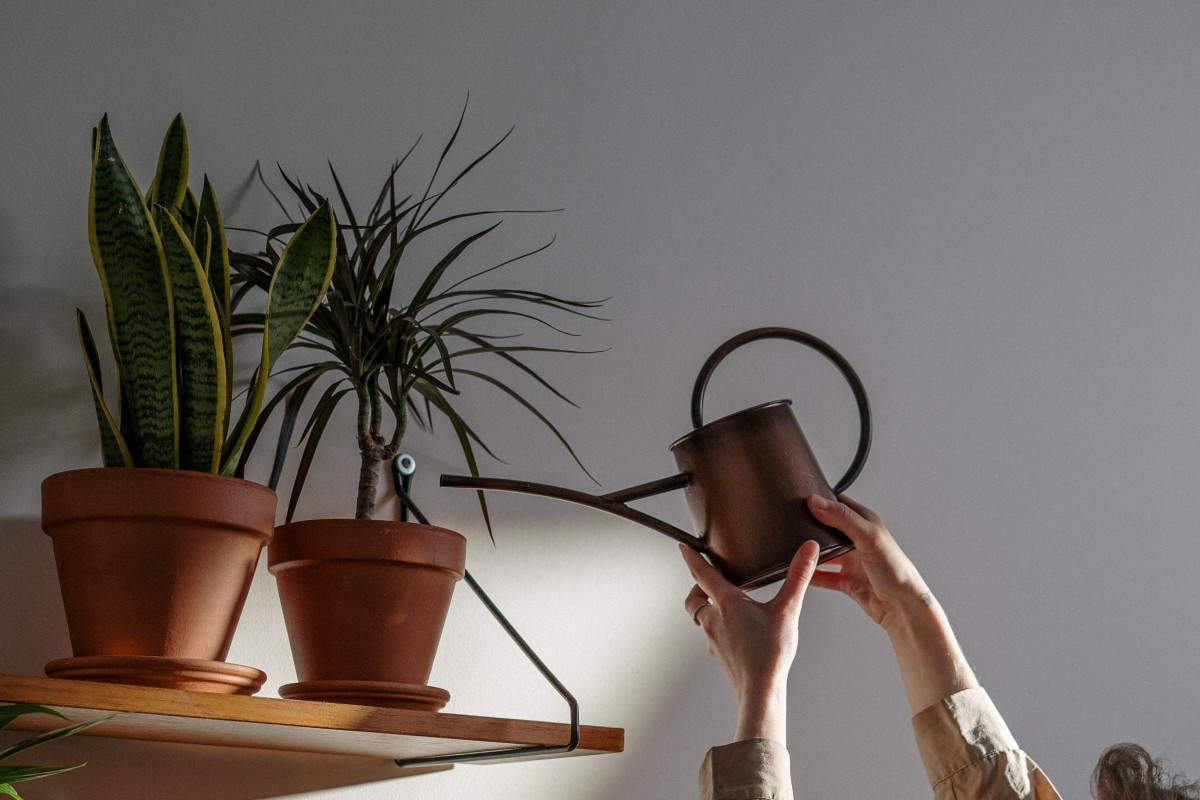 a person watering house plants on a shelf