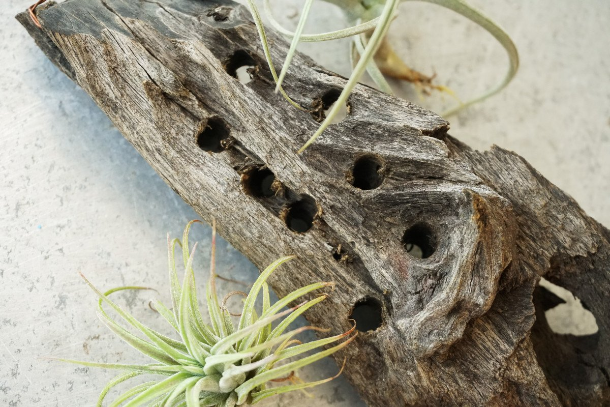 a photo of a piece of wood with holes drilled into it