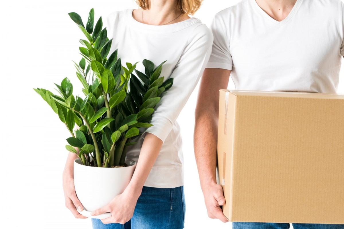 a photo of a couple holding cardboard  a box and a new zz plant