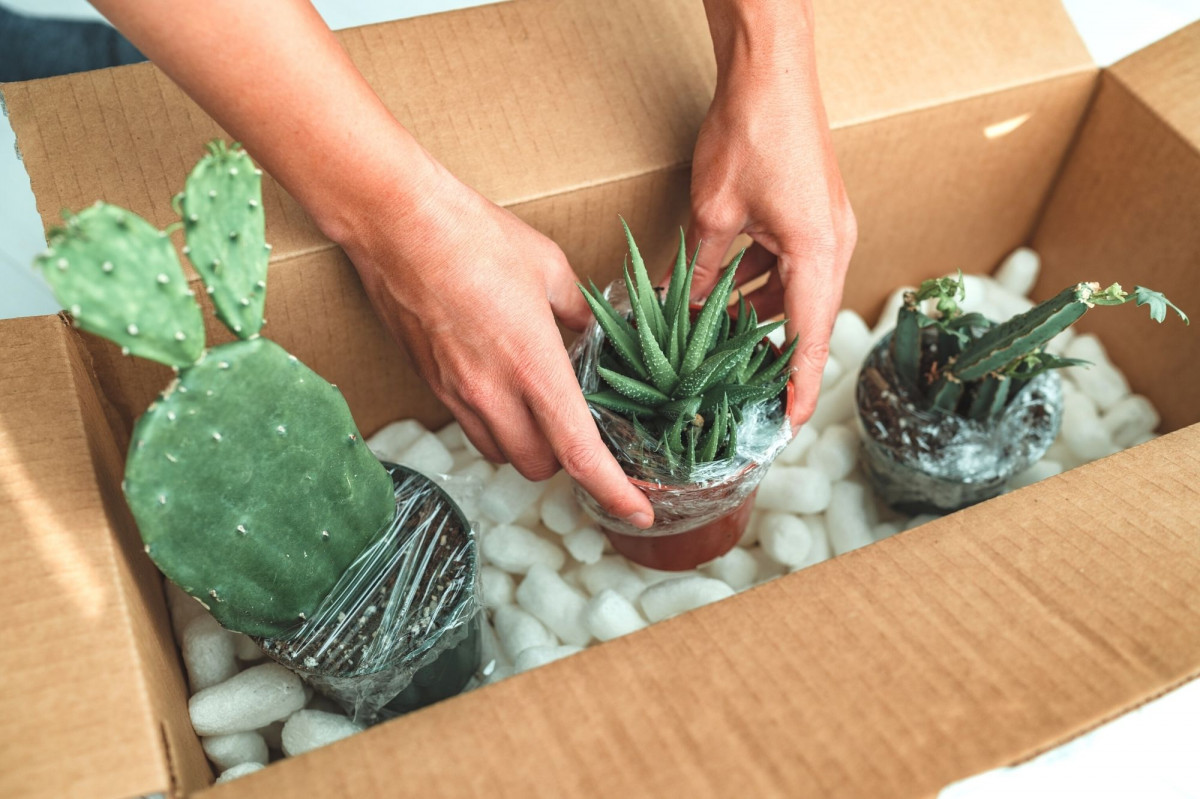 a photo of a person unboxing succulents