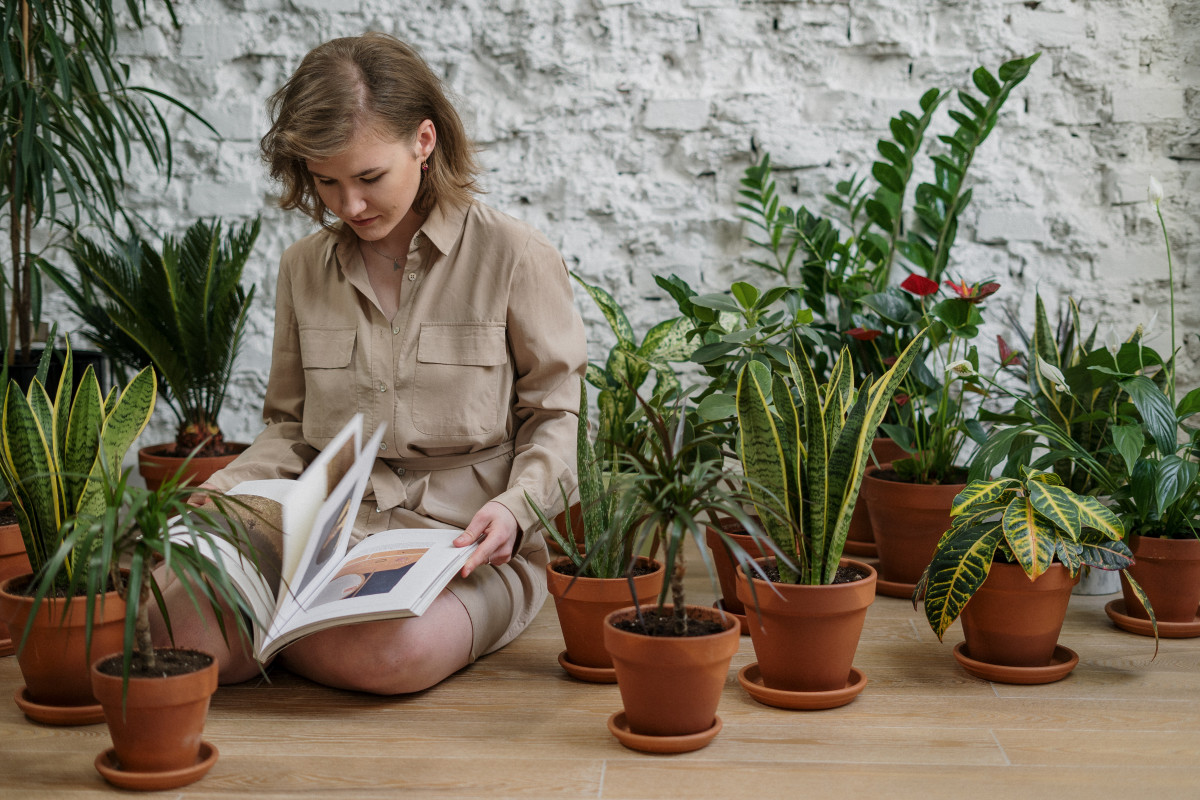 a person reading a book about house plant care