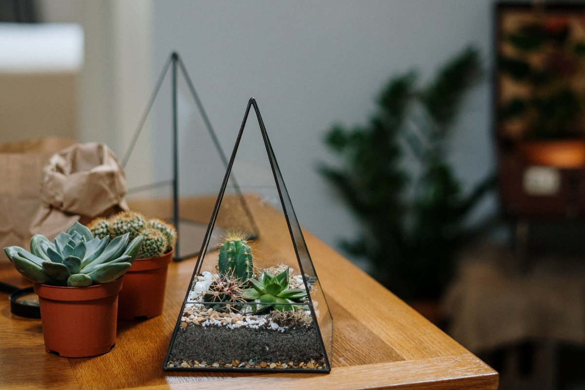 a photo of a succulent terrarium with cacti in it