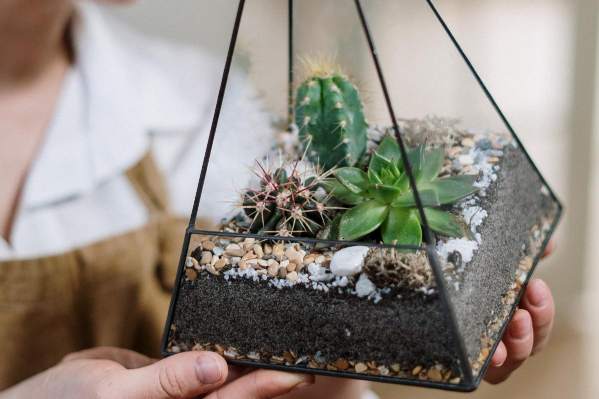 a close-up photo of a succulent terrarium