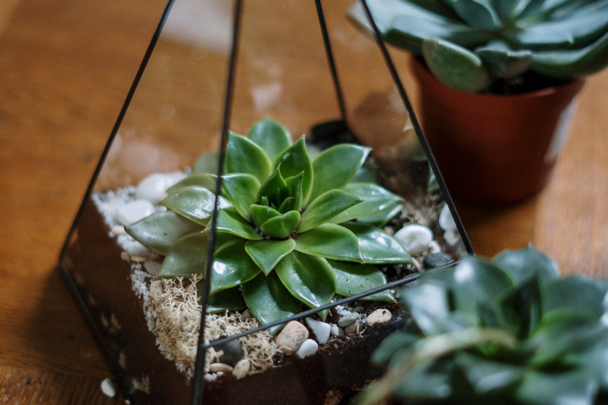 a photo of the finished succulent terrarium