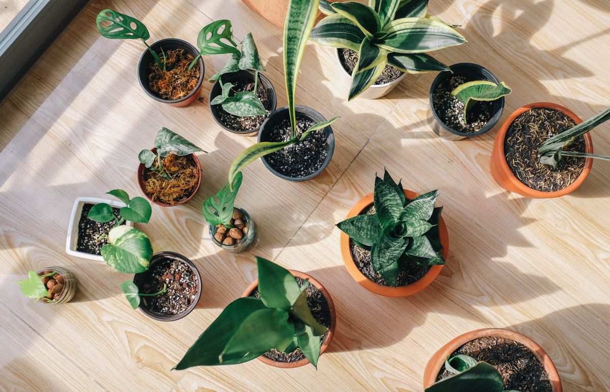 Many house plants basking in sunlight