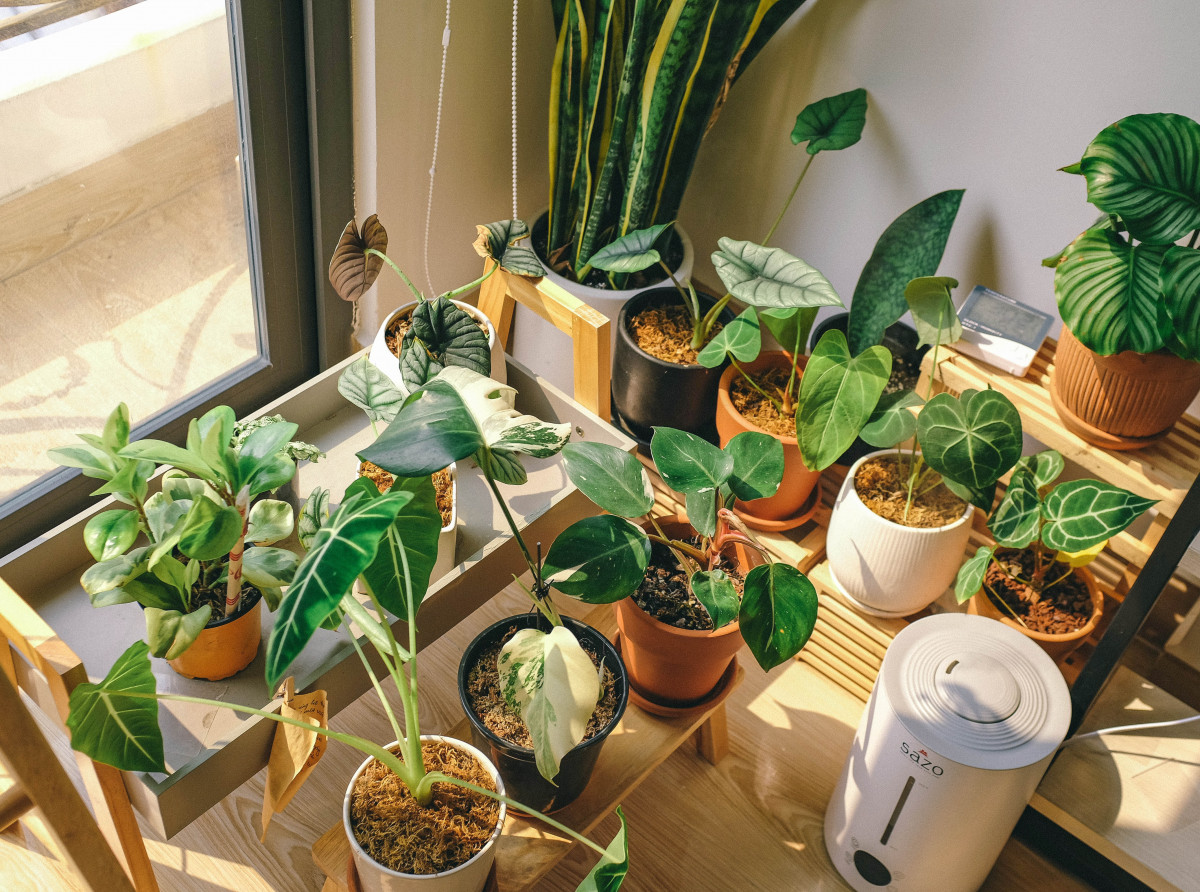 a numbe rof houseplants by a large window