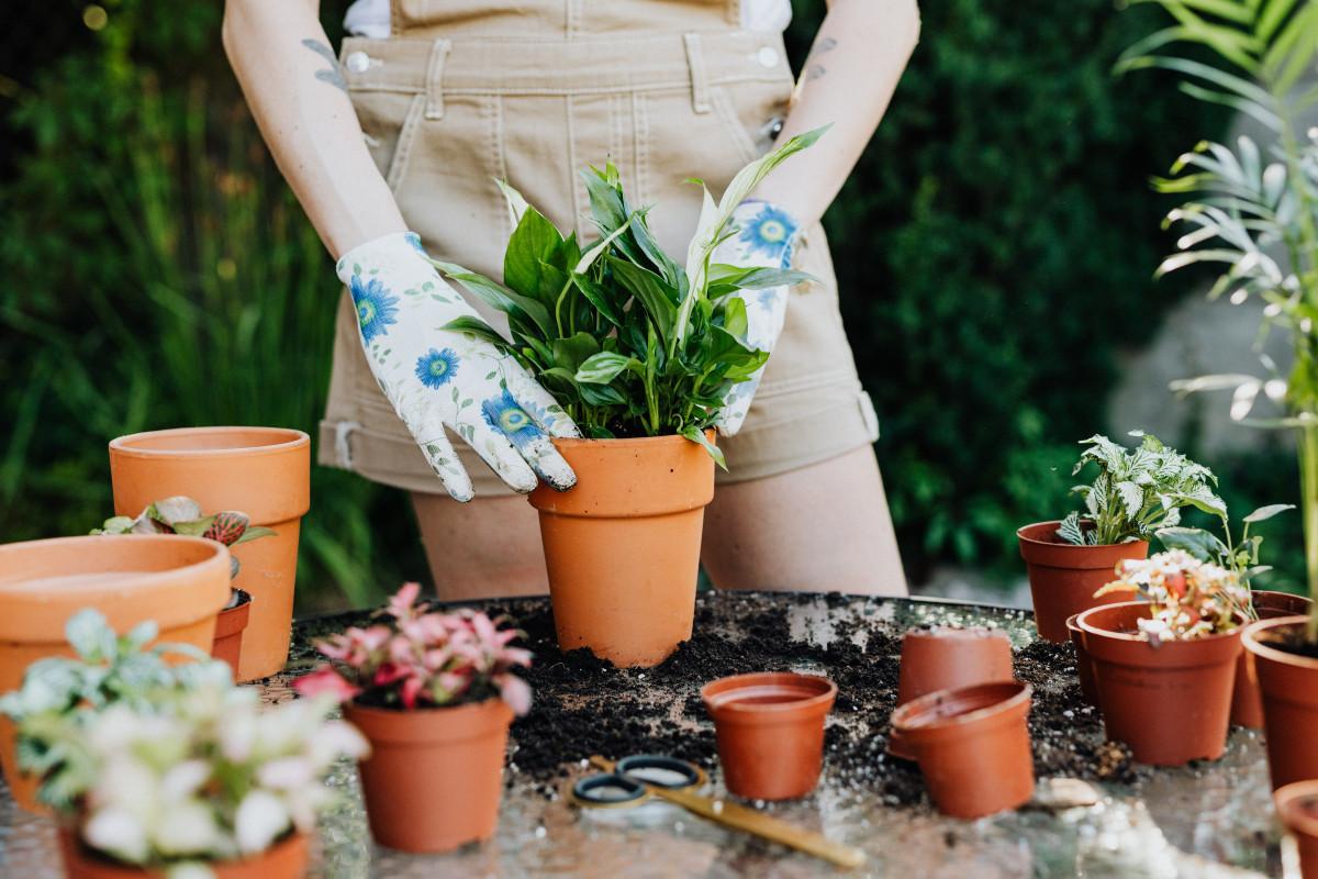 a person planting a plant into a terra cotta pot