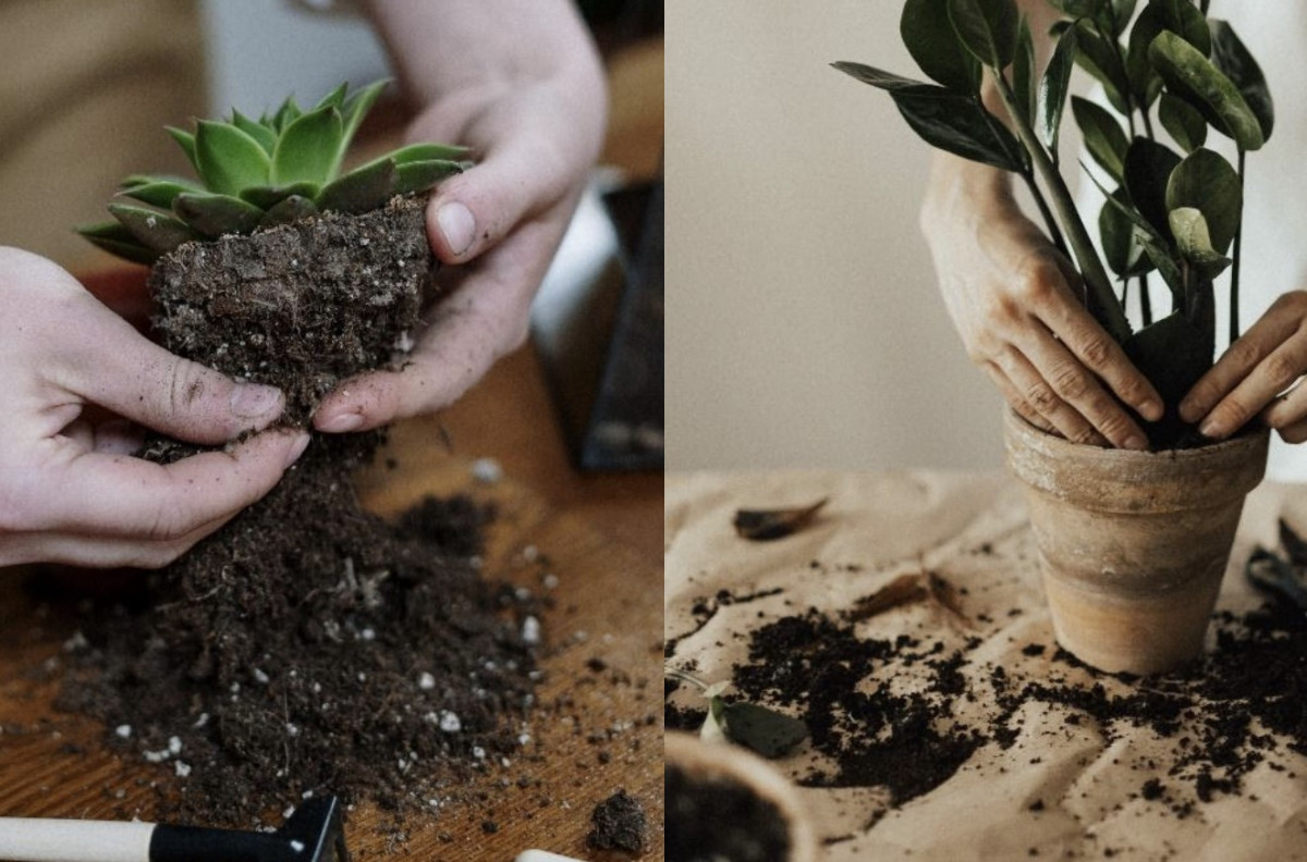 picture of two people repotting a succulent adn a ZZ Plant
