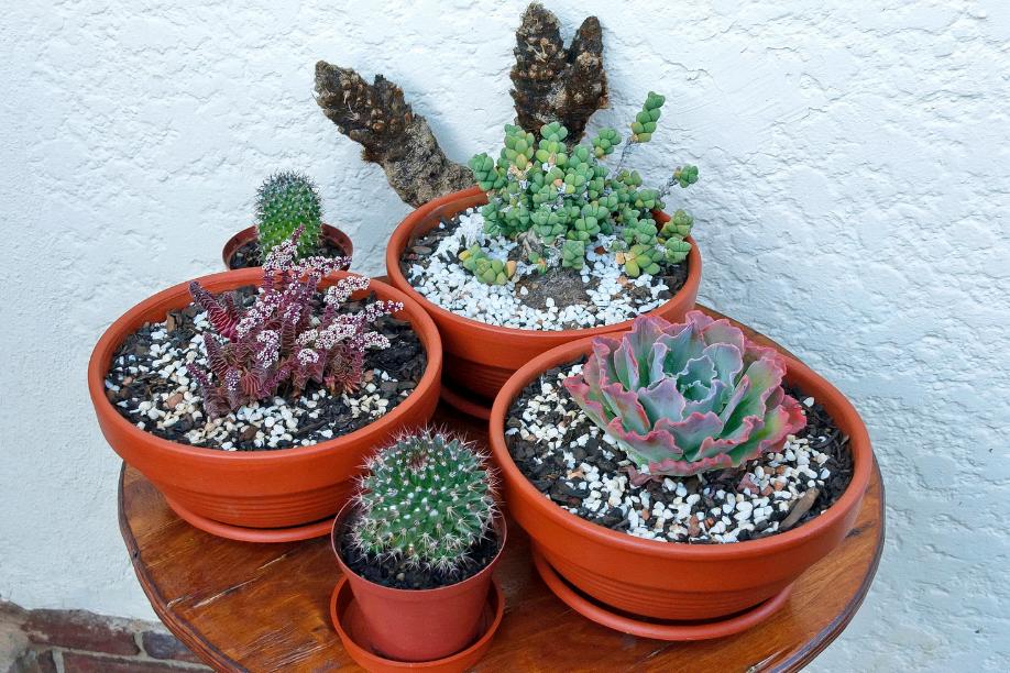 a photo of a succulent arrangement
