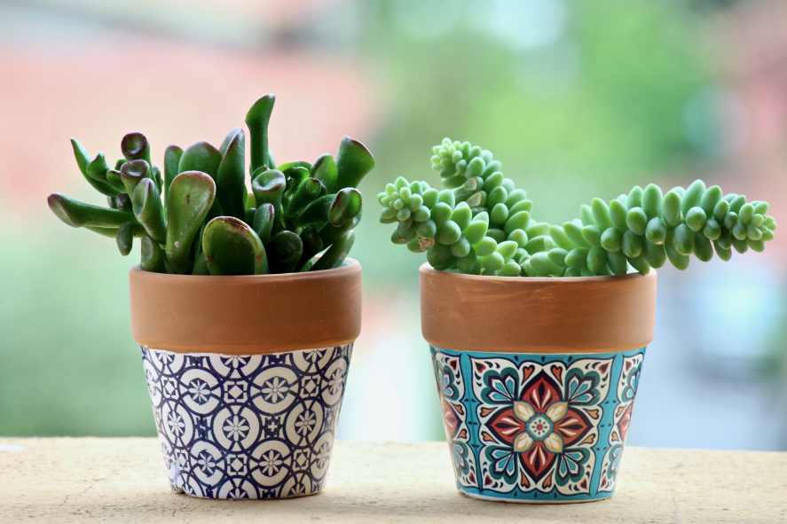 a photo of two succulents in hand-painted terra cotta pots