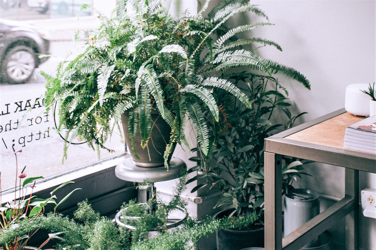 A photo of house plants in an East facing windowsill