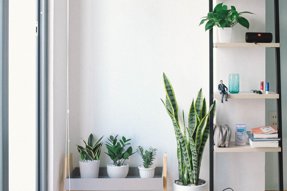 A photo of house plants in a north facing window