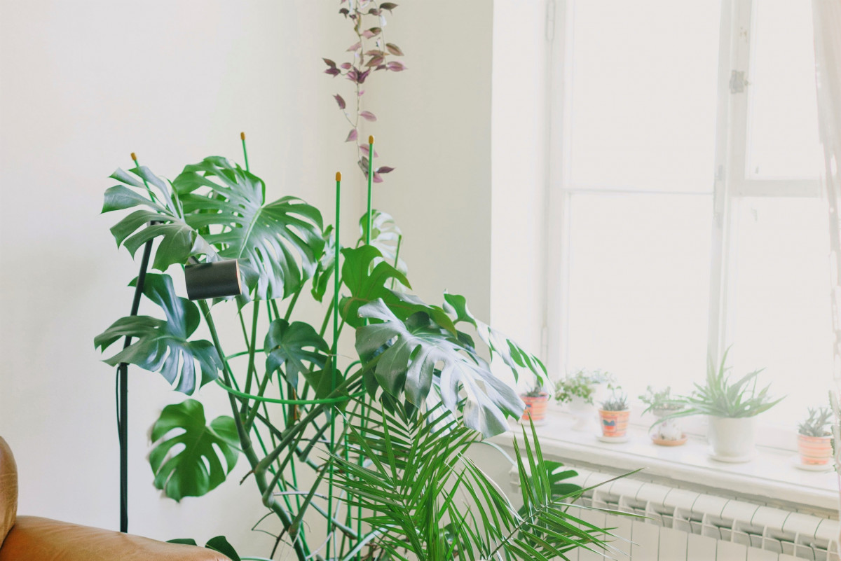 A photo of house plants in a West facing window