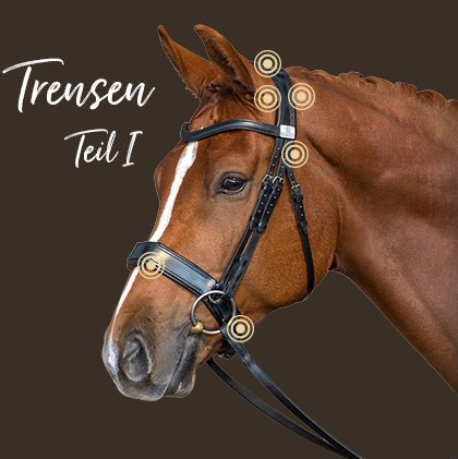 Die Trense und ihre Auswirkung auf die Leistung des Pferdes