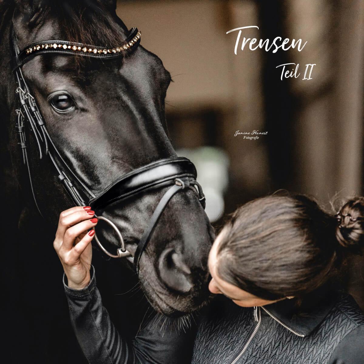 Die Anatomie des Pferdekopfes in Hinblick auf die Trense
