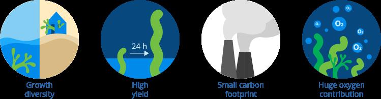 Environmental benefits of algae-based foods