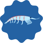 What Is Krill Oil?