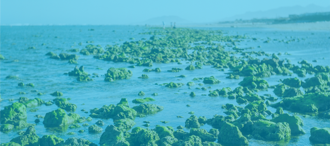 How Algae Based Foods Might Be The Future