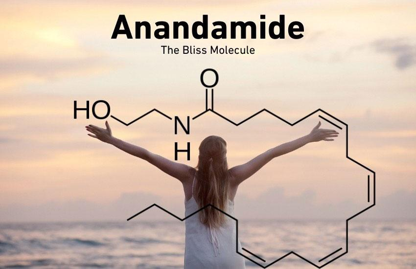 What is Anandamide and Why is it The Bliss Molecule?