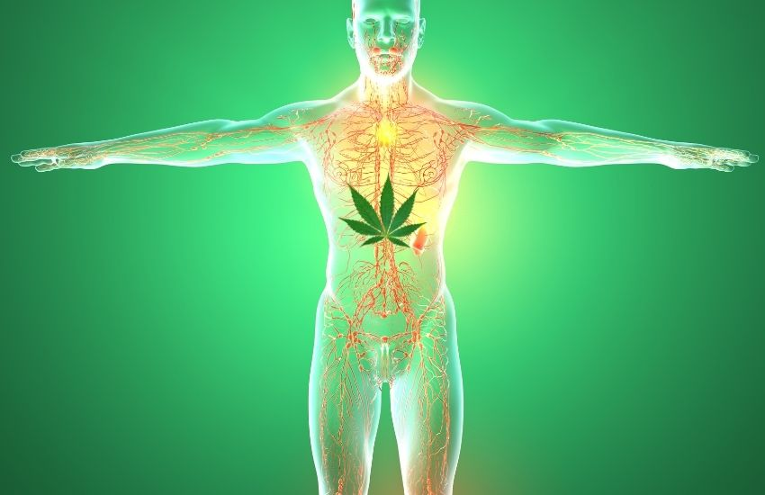 4 Interesting Facts About Your Body's Endocannabinoid System