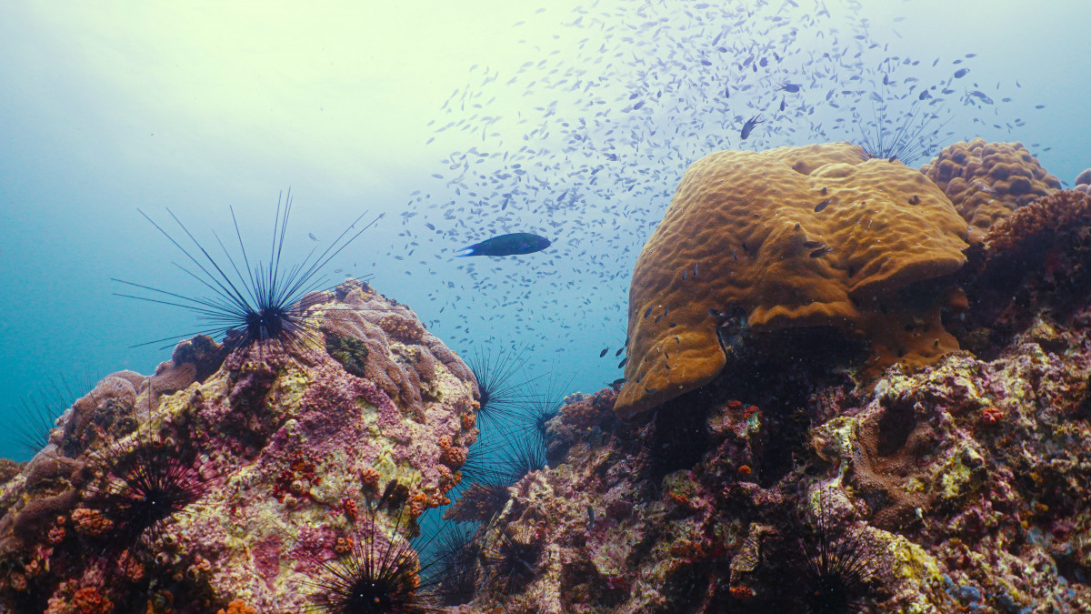 How Does Sunscreen Impact Coral Reefs?