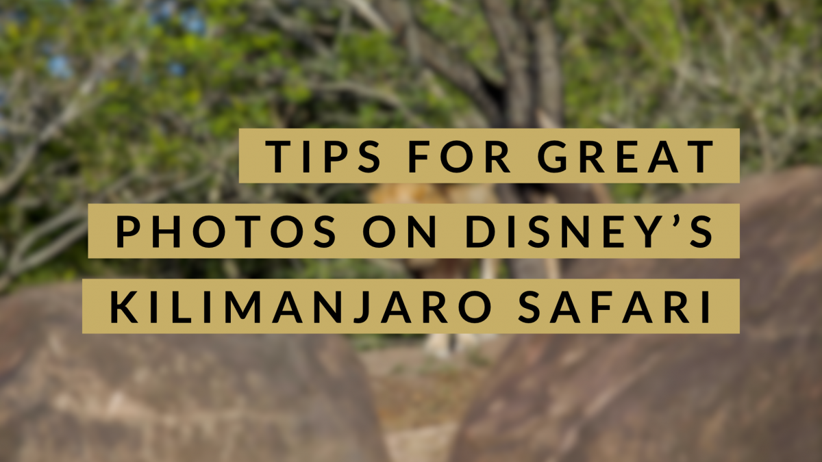 Tips For Great Photos On Disney's Kilimanjaro Safari