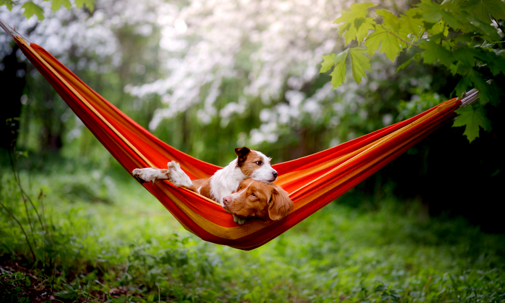 How to Set Up a Hammock? Real Simple Guide for First-Timers
