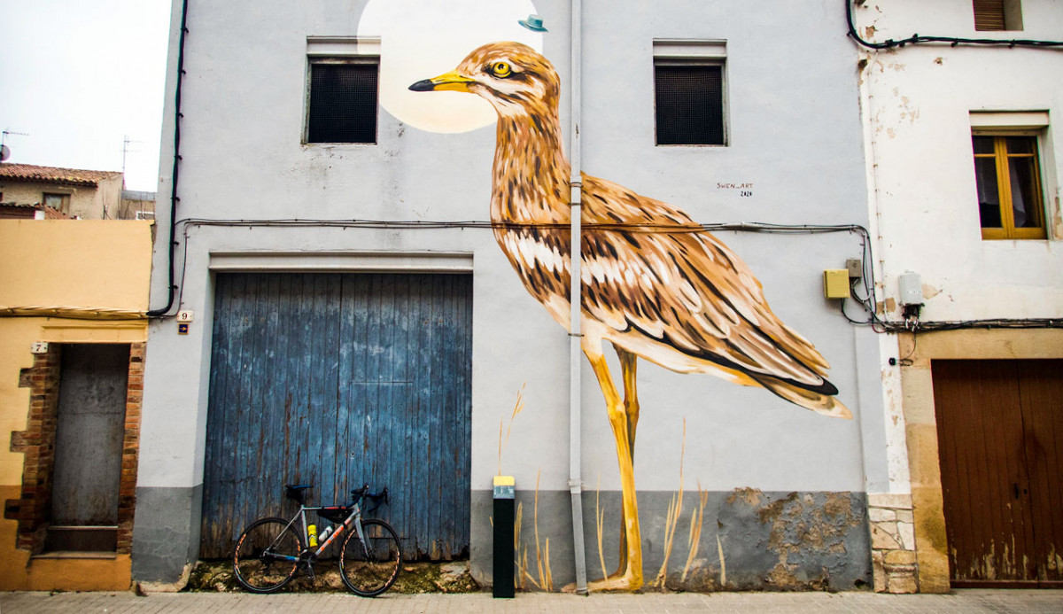 Birdwatching And Cycling? A Perfect Combination