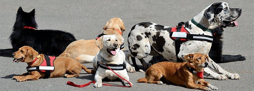 Funeral Homes Providing Comfort with Therapy Dogs
