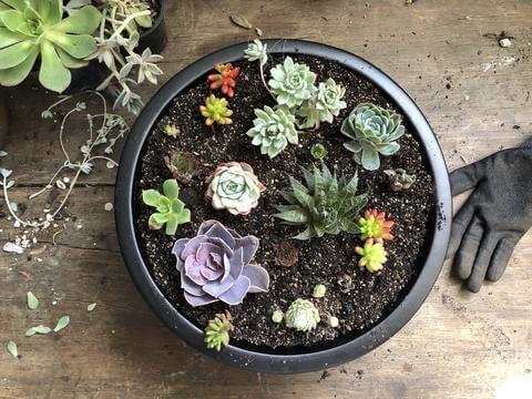 Creating a Succulent Planter