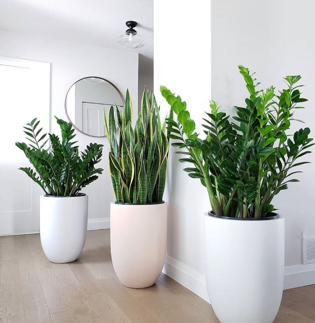 Hardy Indoor Houseplants that will Thrive this Winter